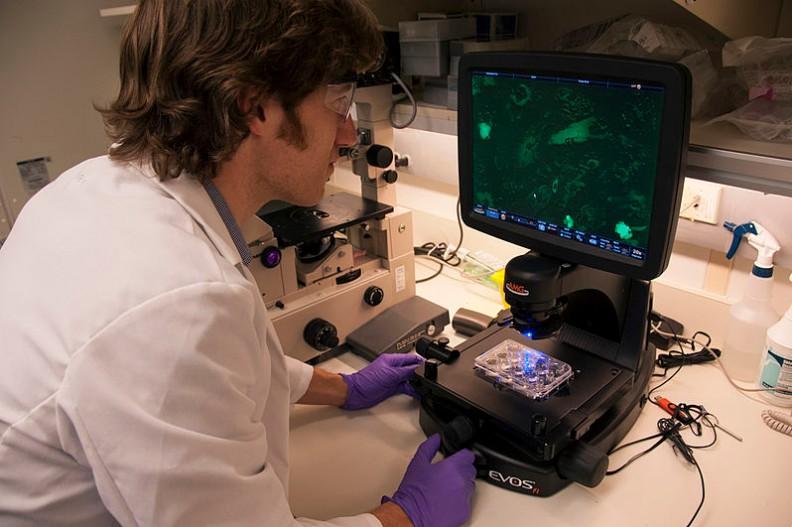 Odkrycie japońskich naukowców może być przełomem w leczeniu SM.   Fot.:The U.S. Food and Drug Administration/Wikimedia Commons