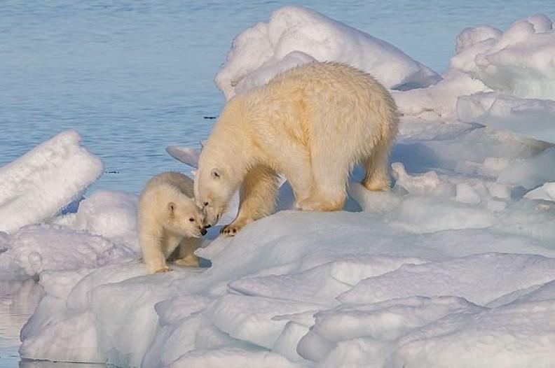 Wiele wskazuje na to, że problem globalnego ocieplenia nie jest tak poważny jak alarmują naukowcy. Może się również okazać, że zmiany klimatyczne nie mają żadnego związku z emisją dwutlenku węgla do atmosfery. Fot.: AWeith/ Wilimedia Commons
